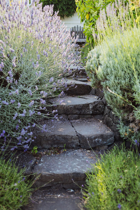 Stone steps leading up to the house