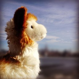 Llama by Douglas