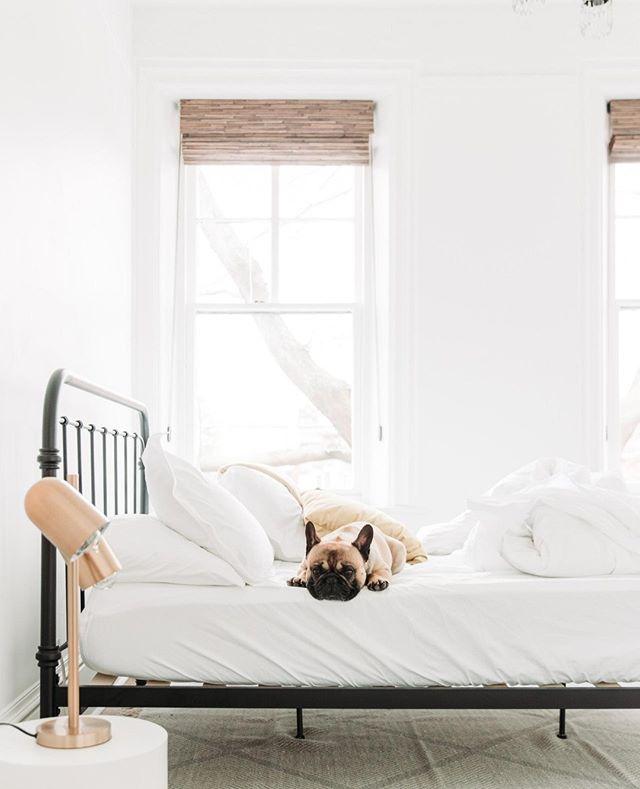 Any excuse to take a nap, right Frank?😅  . . .  #petsupplies #doggrooming #grooming #petgrooming #minimalism #minimal #shoplocal #local #handmade #qualitygoods #design #myloyalcanine #dogs #dog #dogsofinstagram #doglover #dog_features #dogstagram #instapup #cutepetclub #huffpostgram #ilovemydog #topdogphoto #weeklyfluff #adventuredogs #dogscorner #dogsthathike
