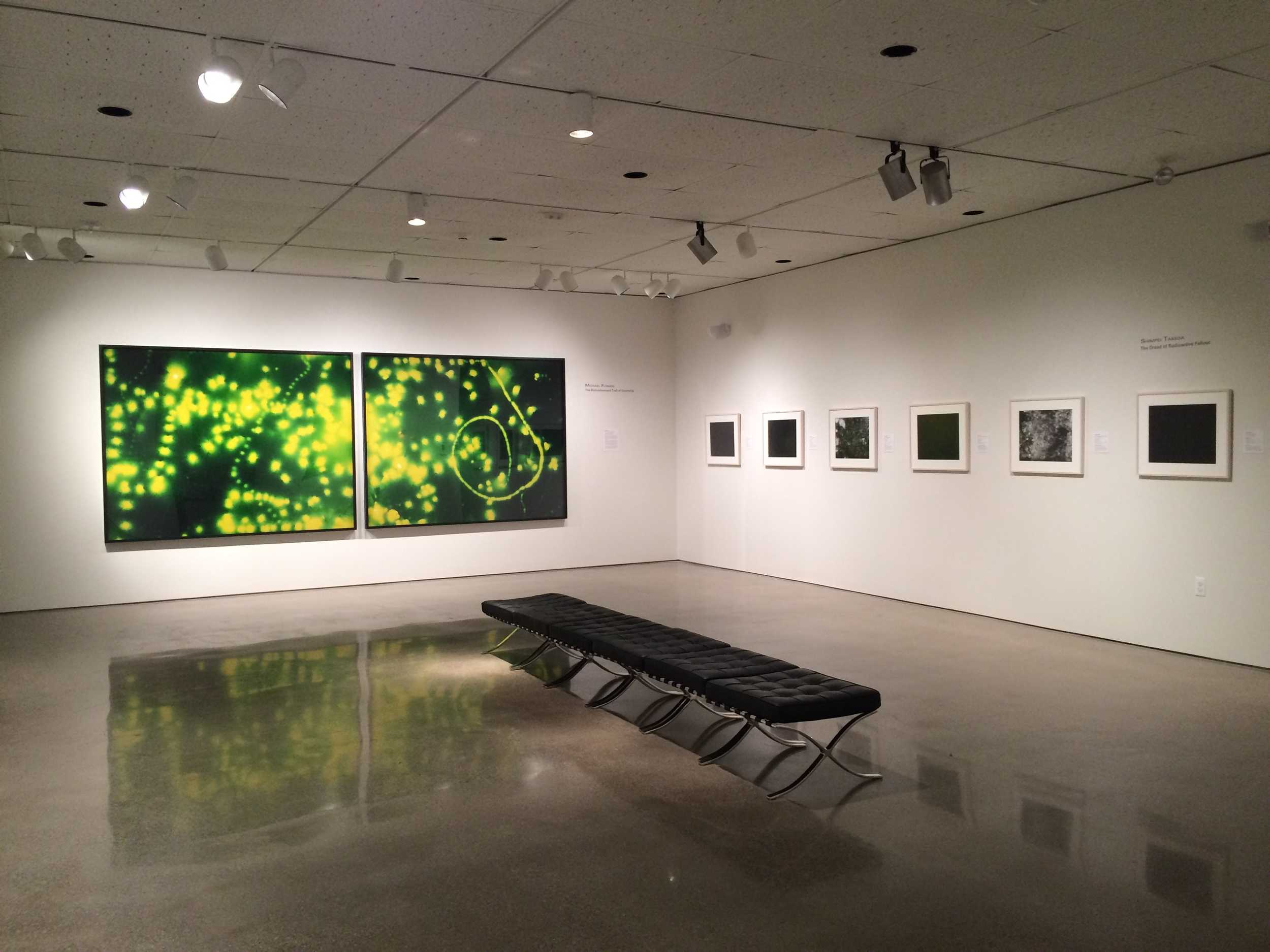 Installation of Double Trouble, 2014.