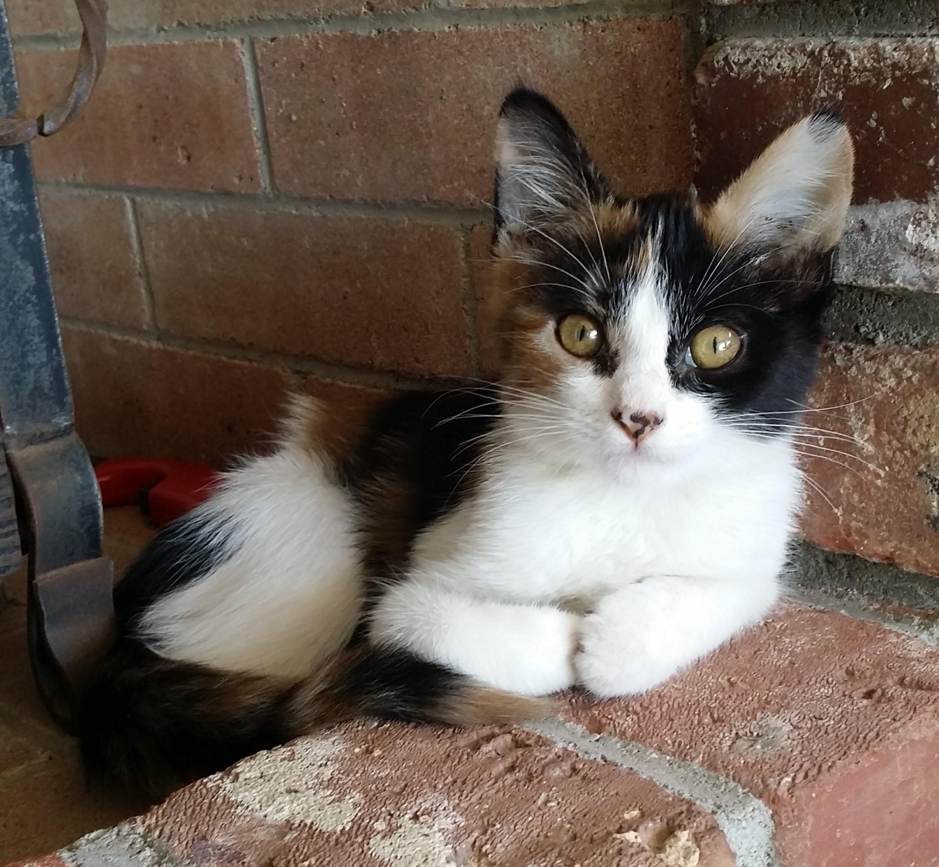 square cat.jpg