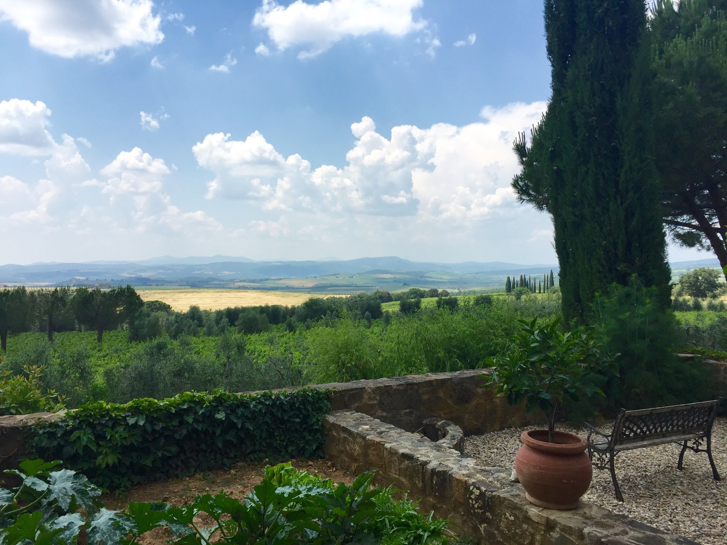 Mate Winery, Montalcino