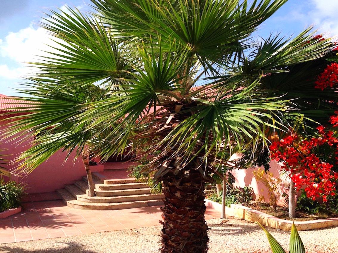 palmtree-entrance.jpg