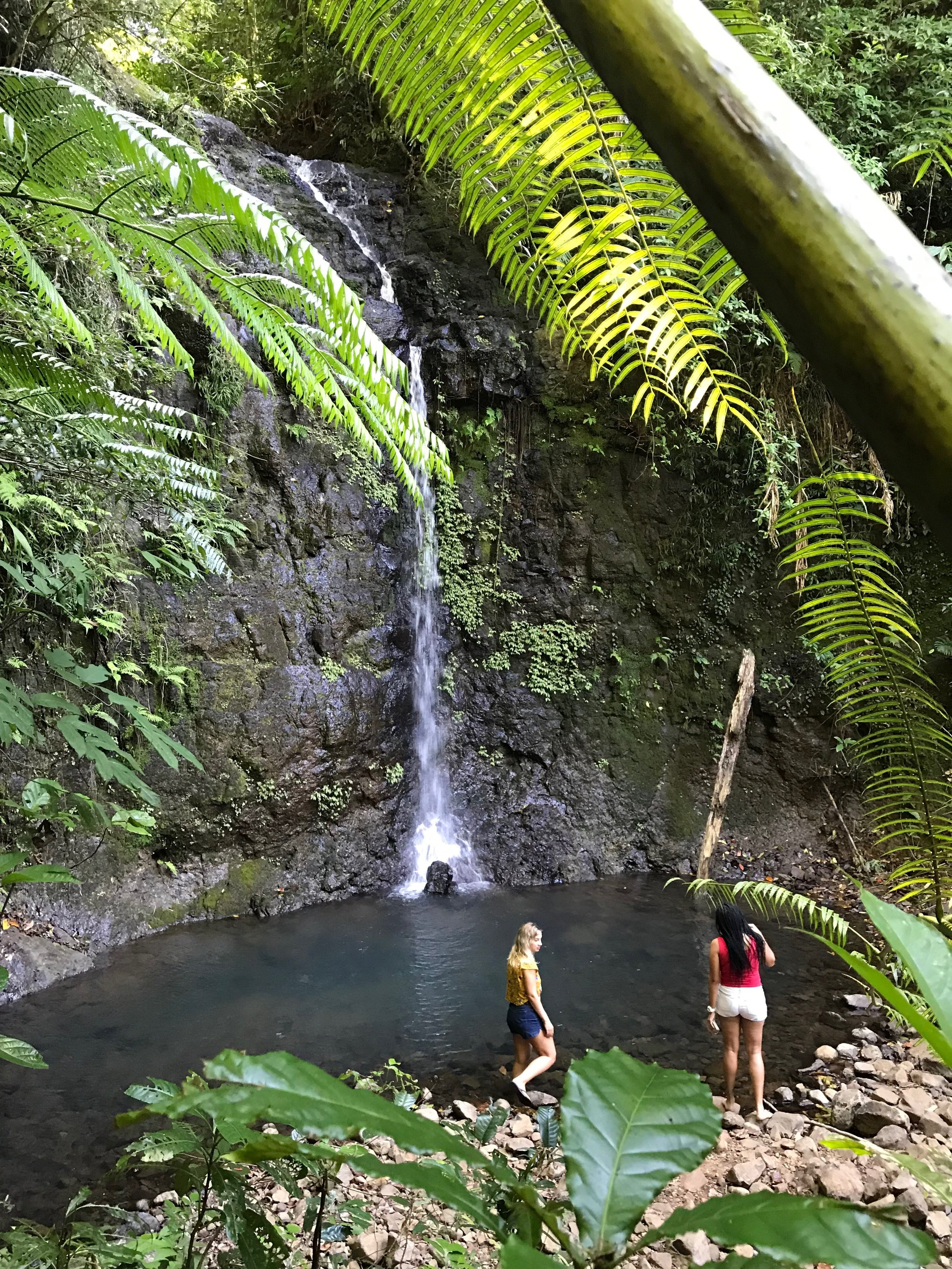 Silver Crook Falls en Route to the Nandroya Falls