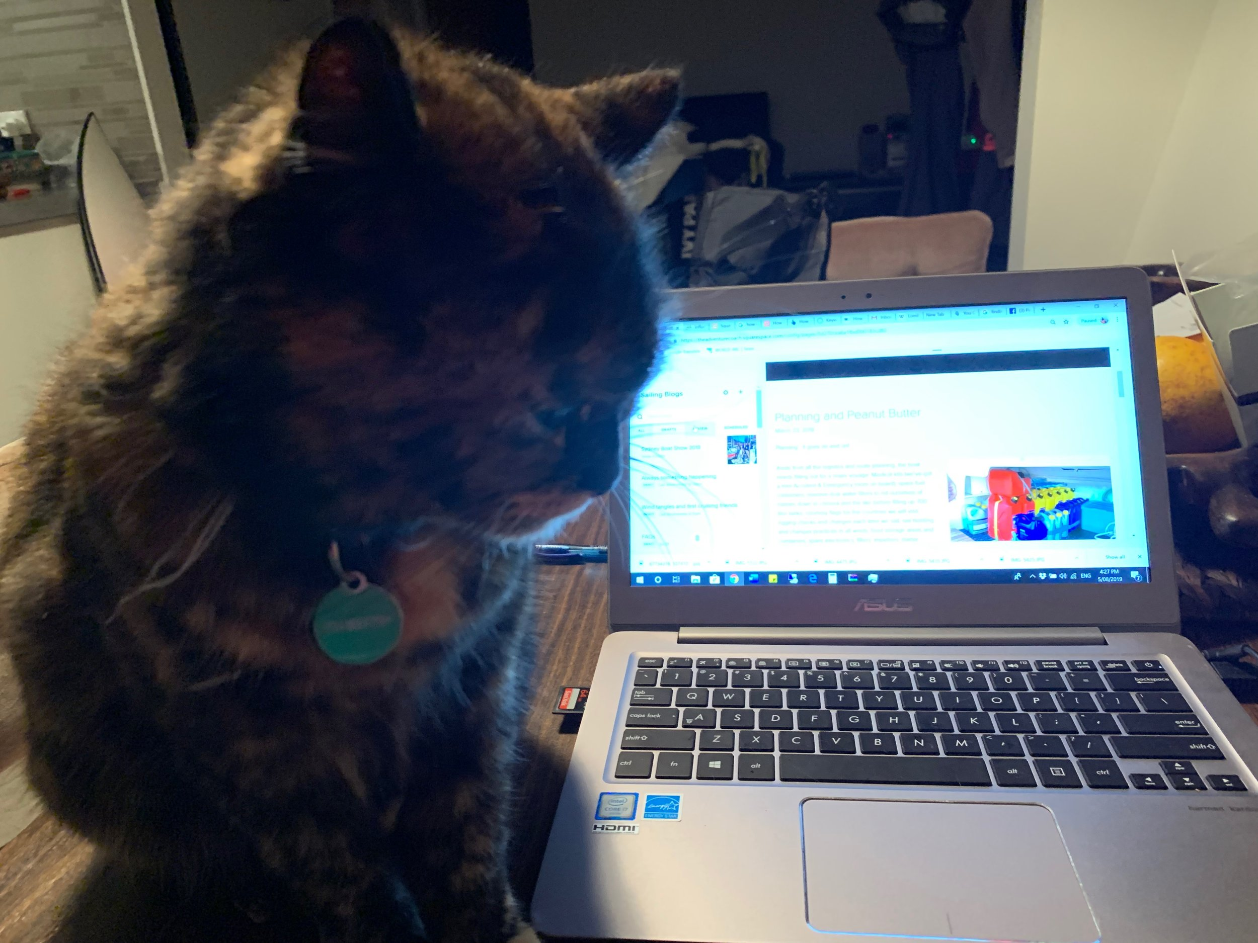 Pippa ably assists me to do some writing