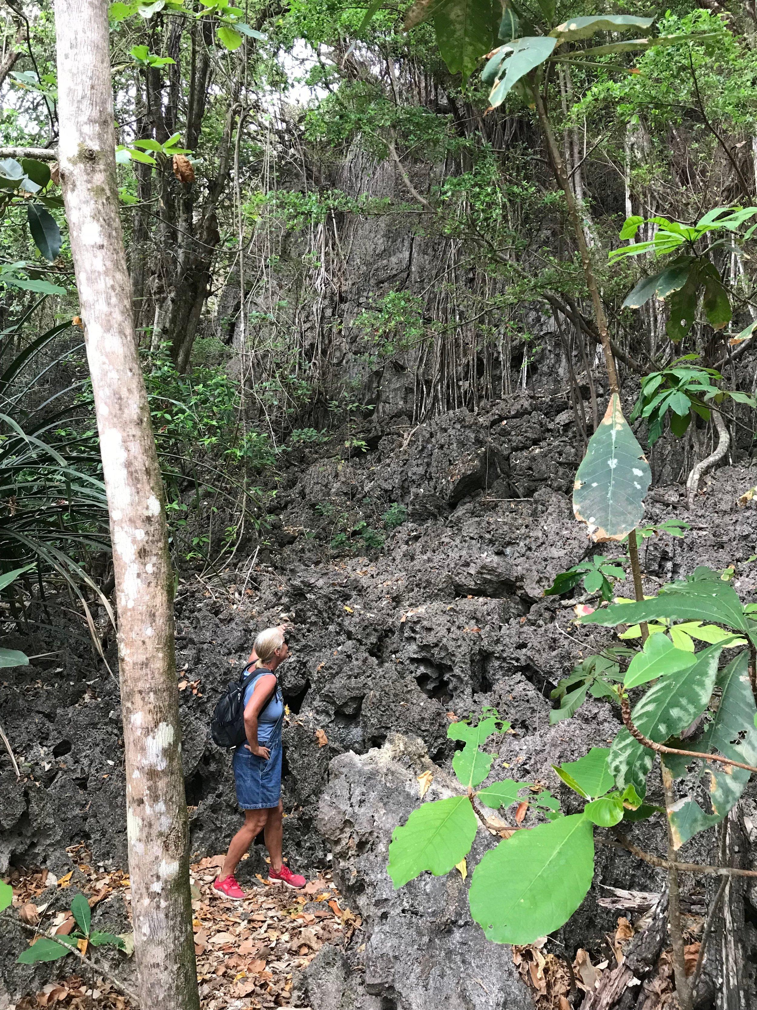 Jurassic Park-like walk to Dollys Beach