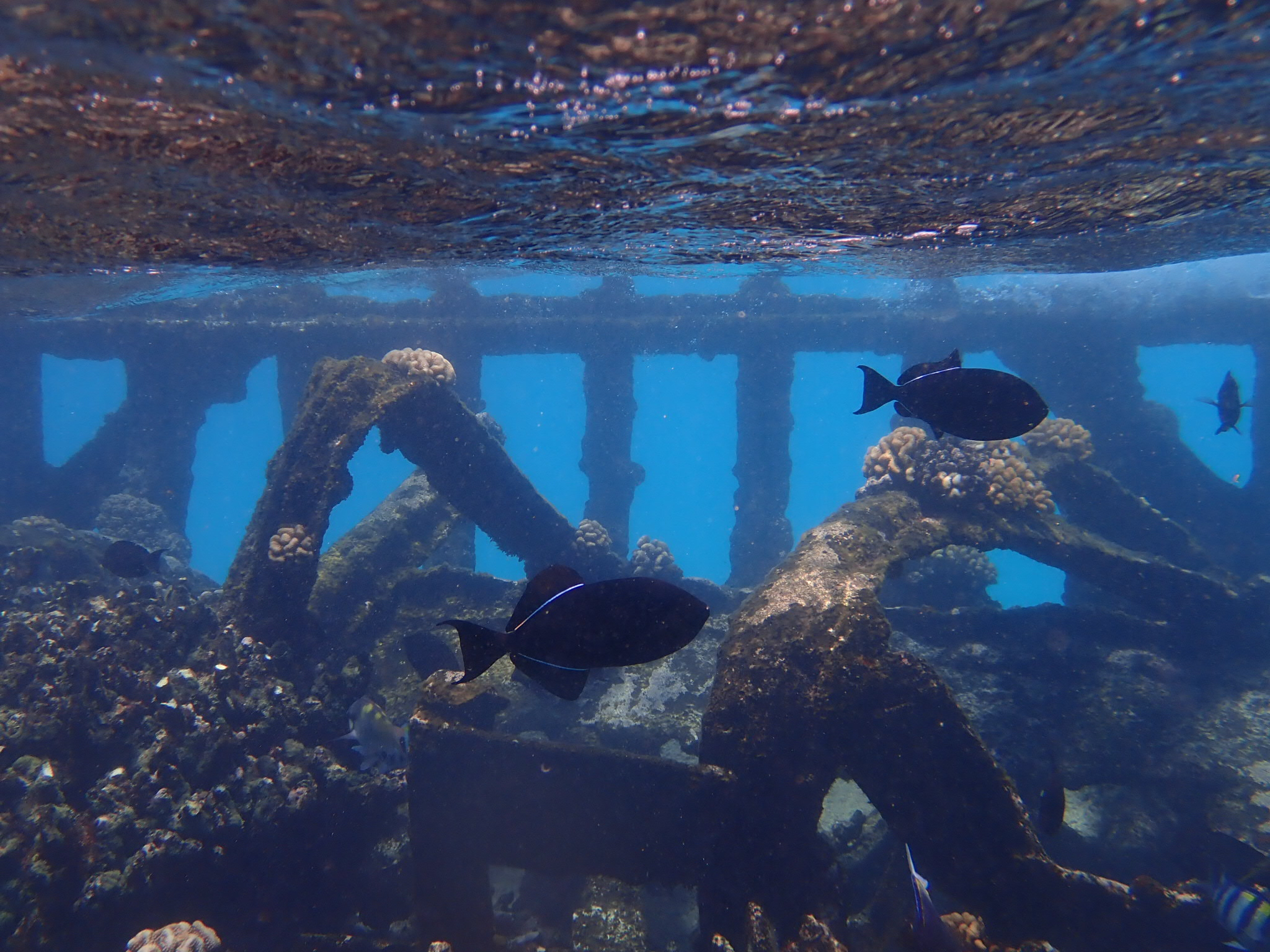 Snorkelling the wreck