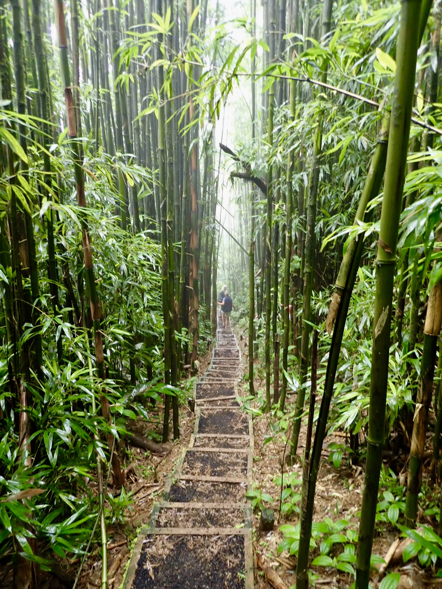 The Bamboo forest in the mist...