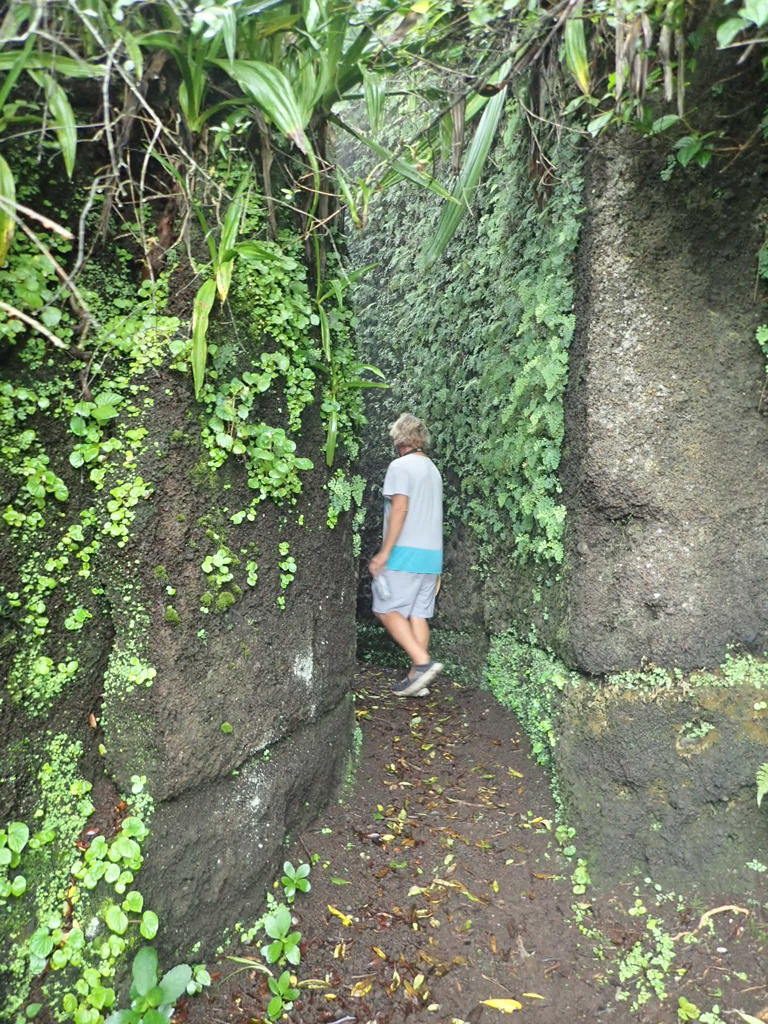 Intriguing Elliots Pass Walkway