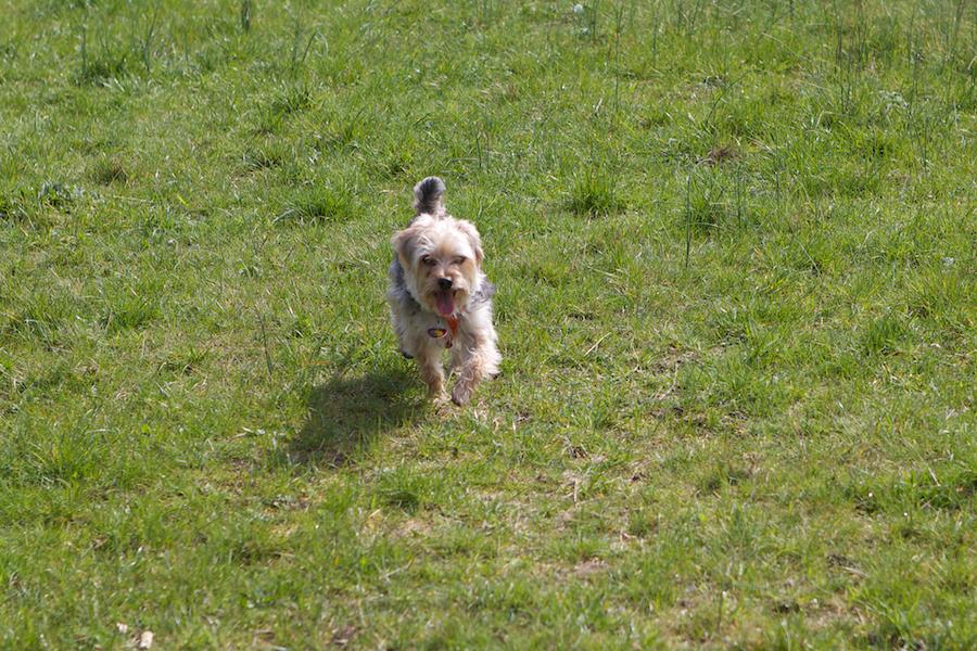 Dog-Boarding-Kew-Richmond-Ham