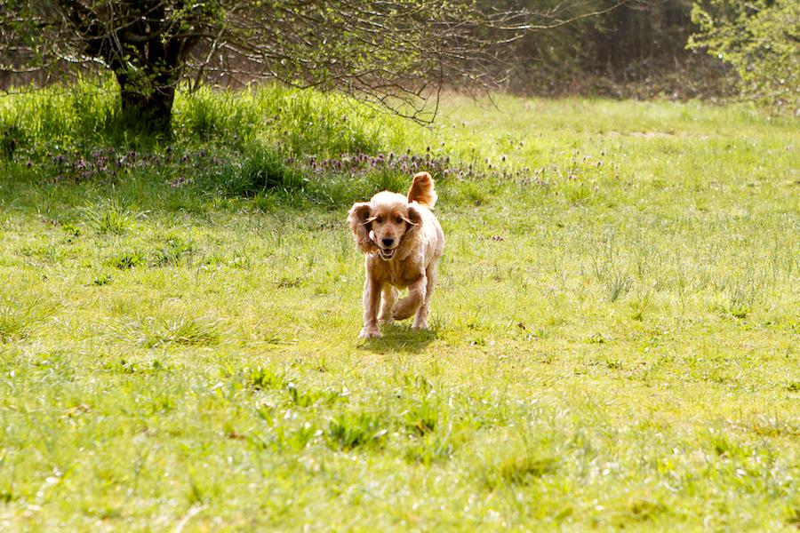Dog-Walking-Sitter-Richmond-Kew