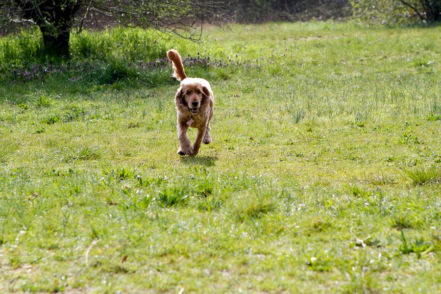 Dog-Sitter-Barnes-Chiswick