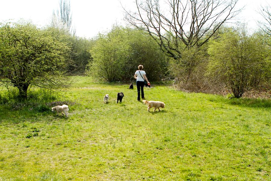 Pet-Sitting-Richmond-Kew-Gardens