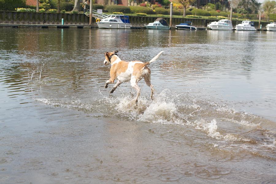 Dog-puppy-walker-Richmond