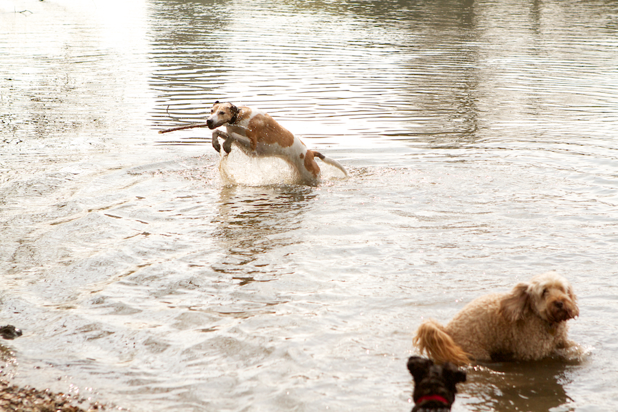 Richmond-Park-Dog-Sitting