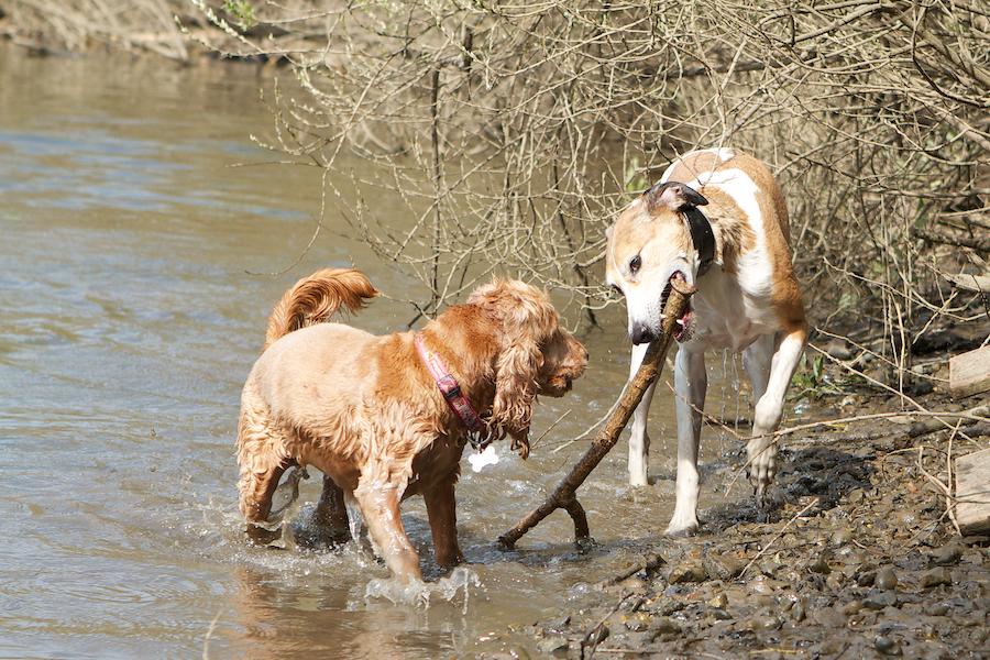 dog-carer-Kew-Gardens-1