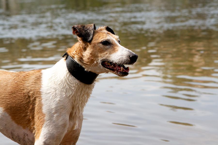 Pet-sitting-In-Richmond-Park