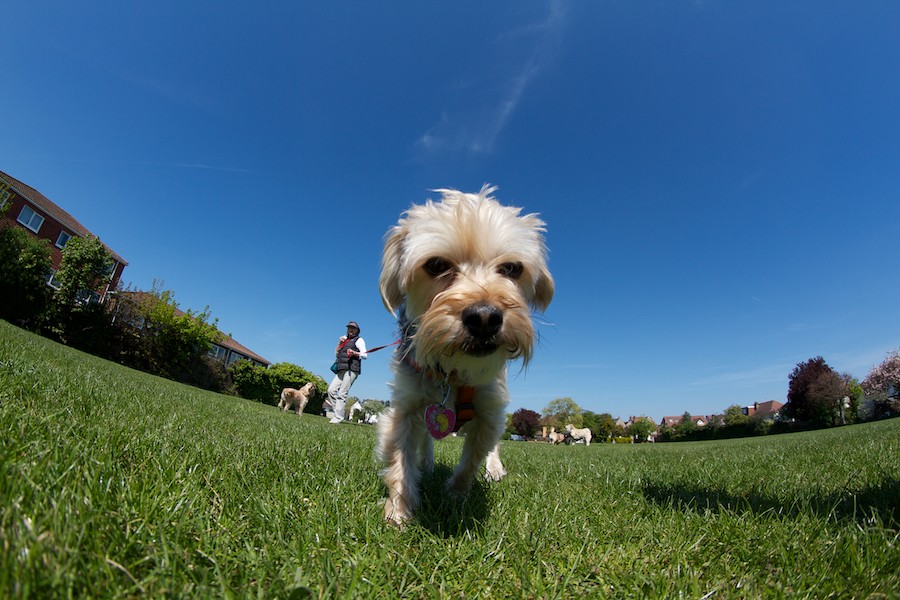 Richmond-Kew-Dog-Sitter