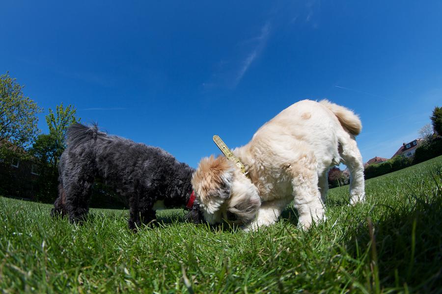 Richmond-Dog-Boarding-cat-carer