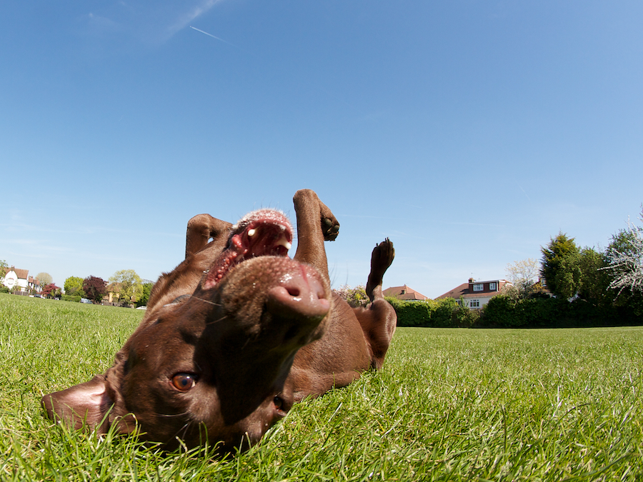 Brentford-Dog-Groomer-Sitter