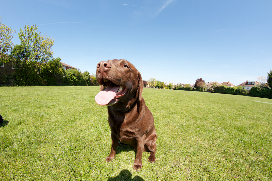 Ham-Dog-Boarding-Richmond-Surrey