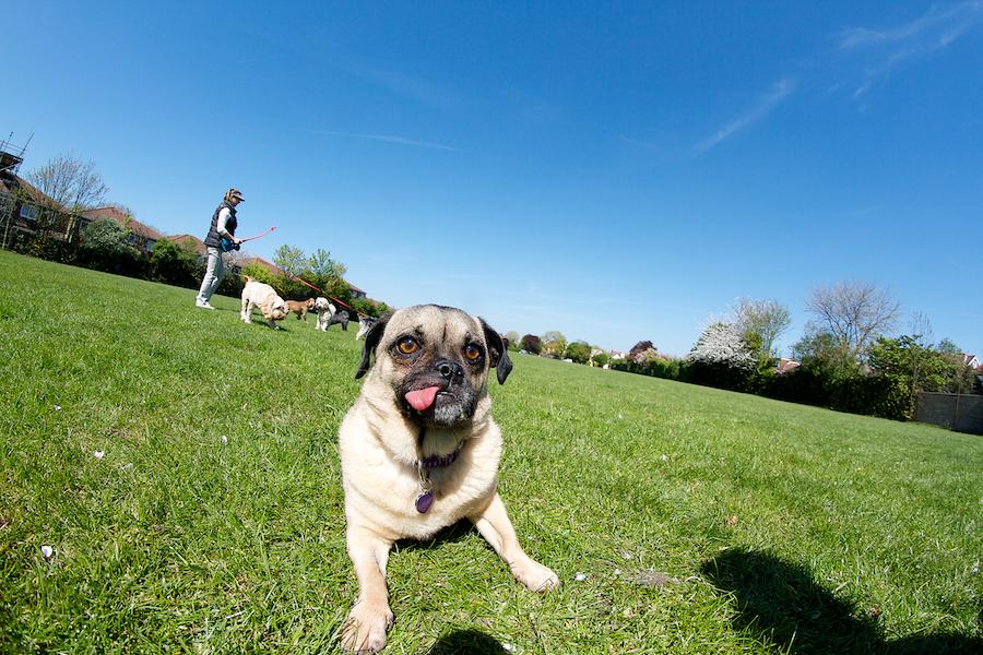 Dog-Boarding-Chiswick-Barnes-Kew