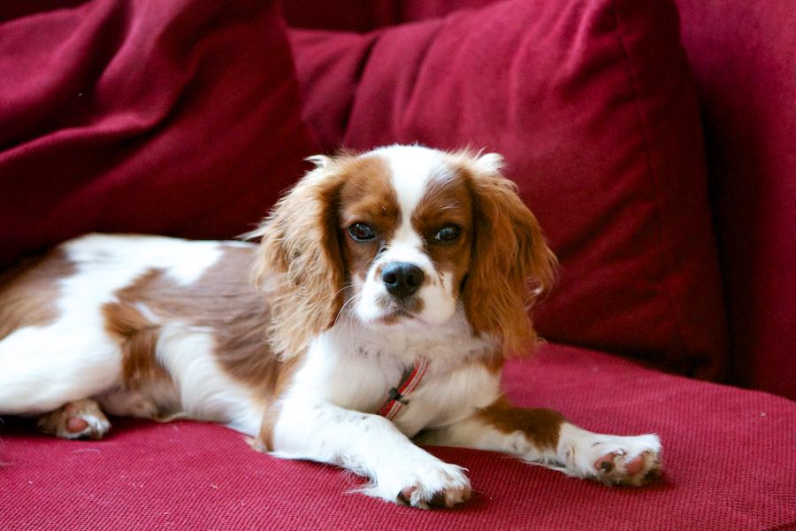 Barnes-Dog-Sitting