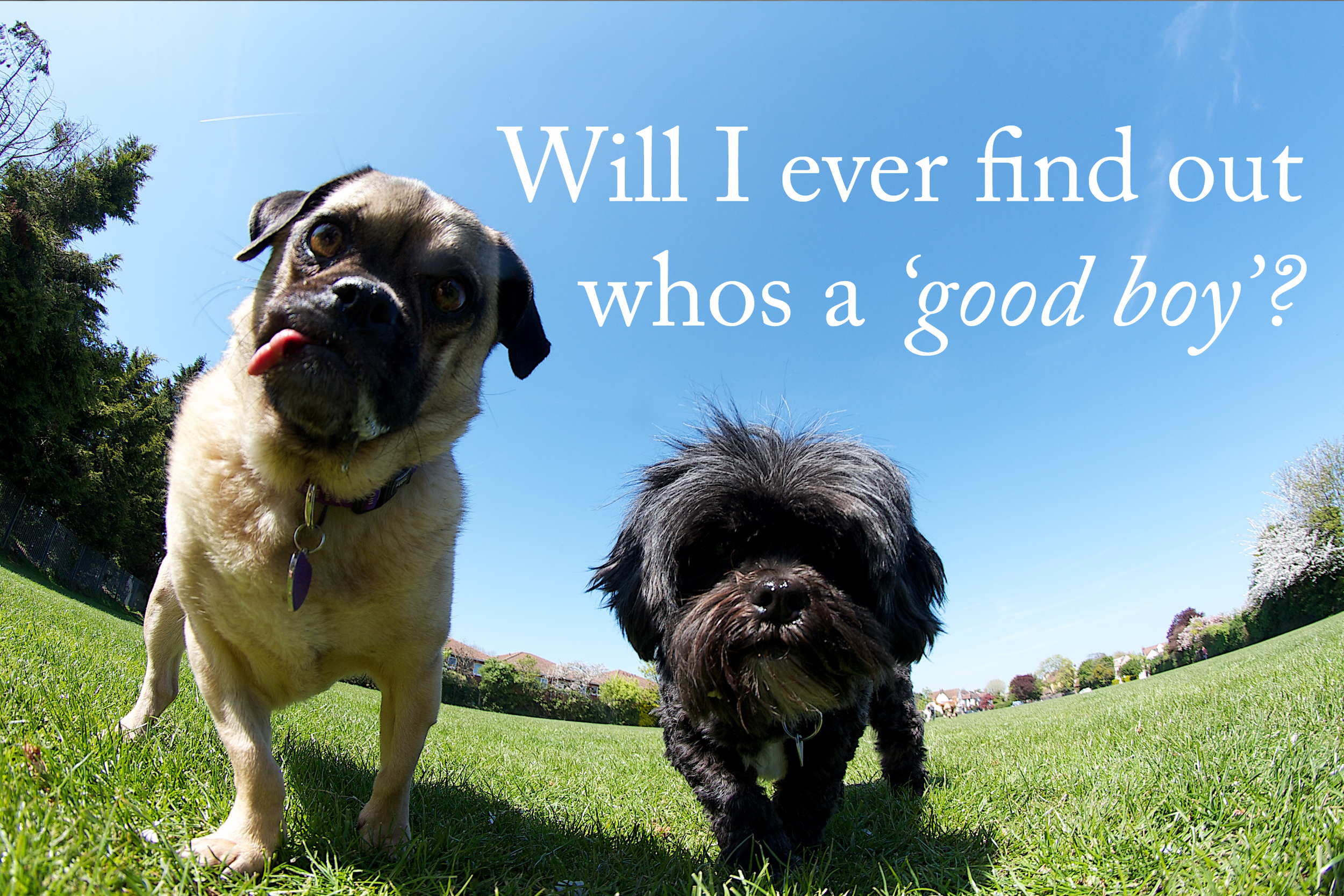 funny dog quote.png