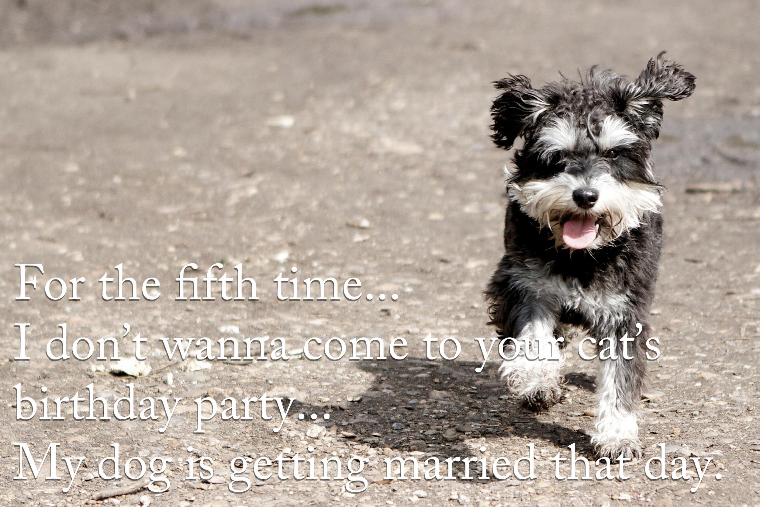 dogsbirthday.jpg