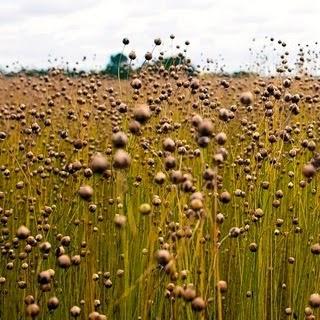 Hora da colheita