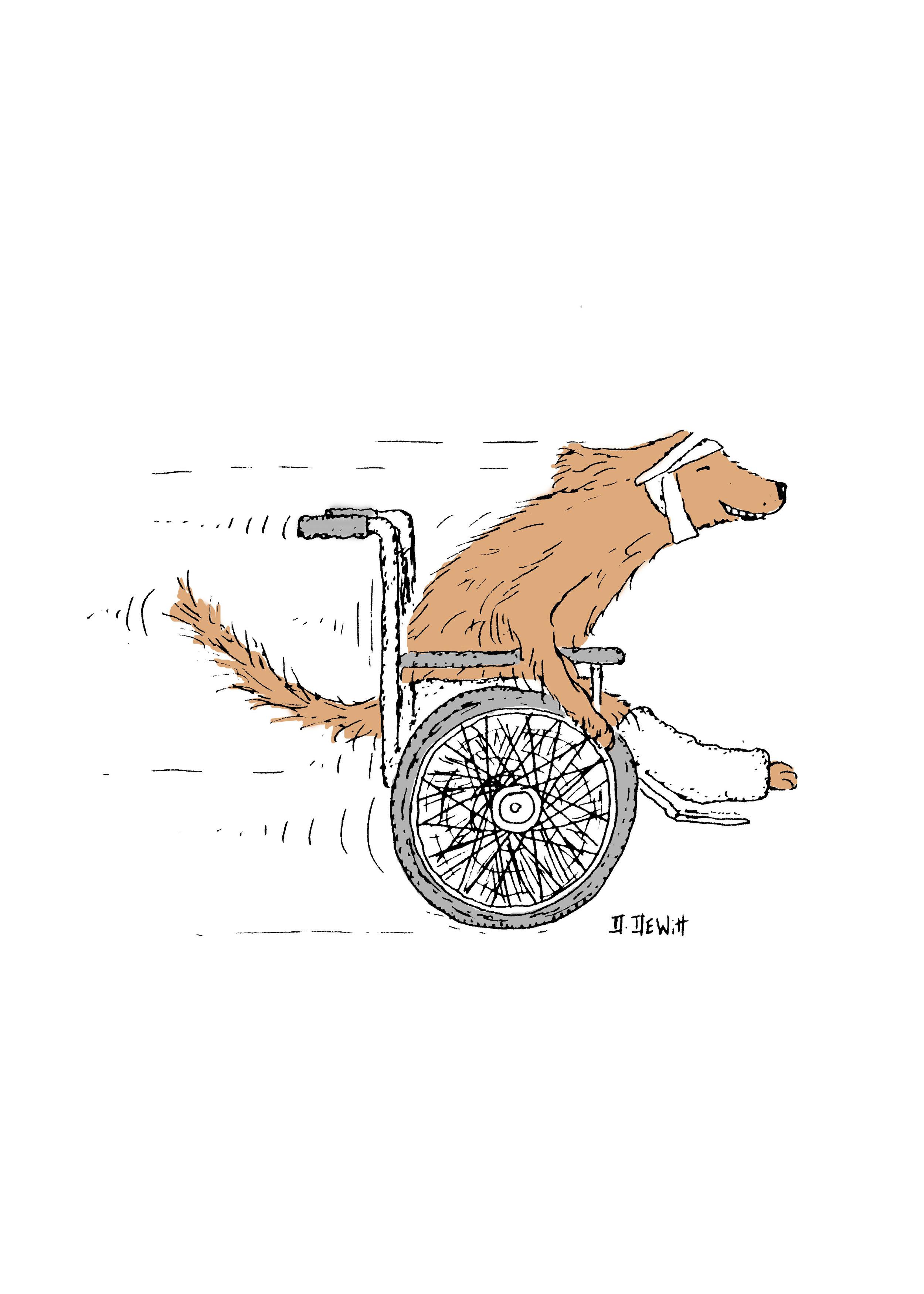 Cat & Dog in wheelchair by David DeWitt