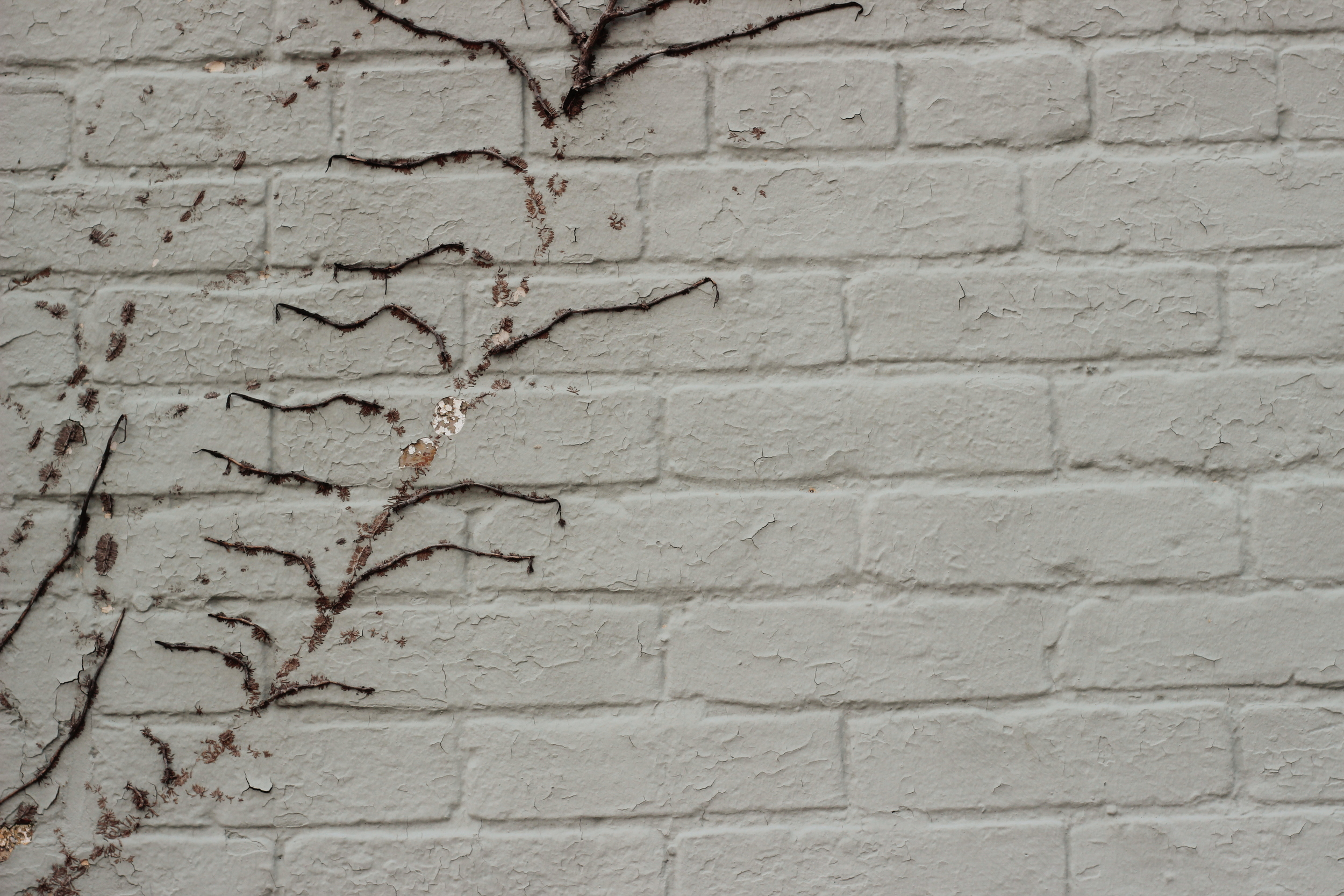 vines on brick wall
