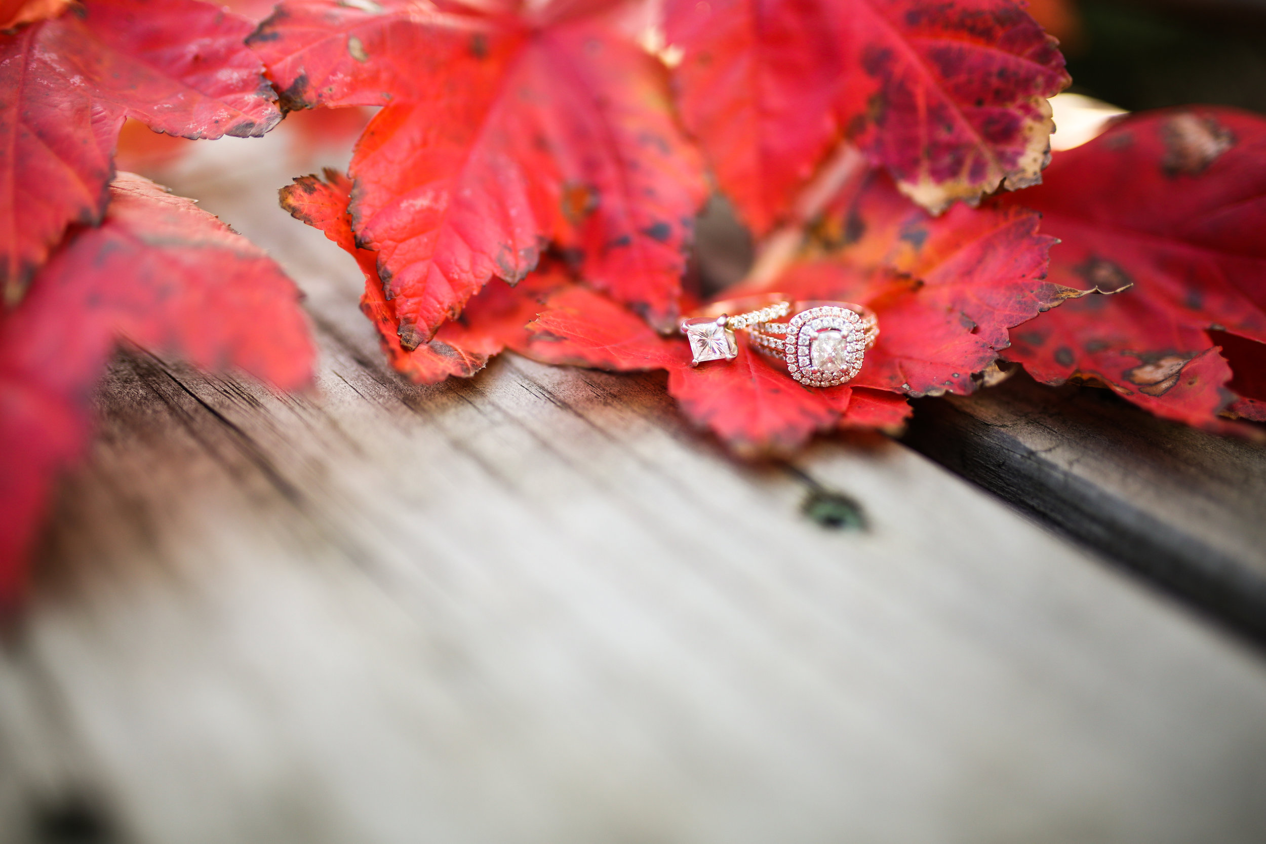 Kristal + Maya Engagement-140.jpg