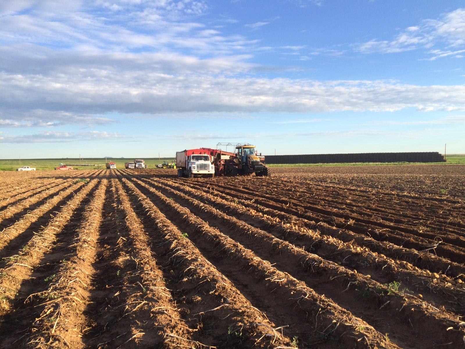 7.16.15 Day 1 - Potato Harvest - horizontal.jpg