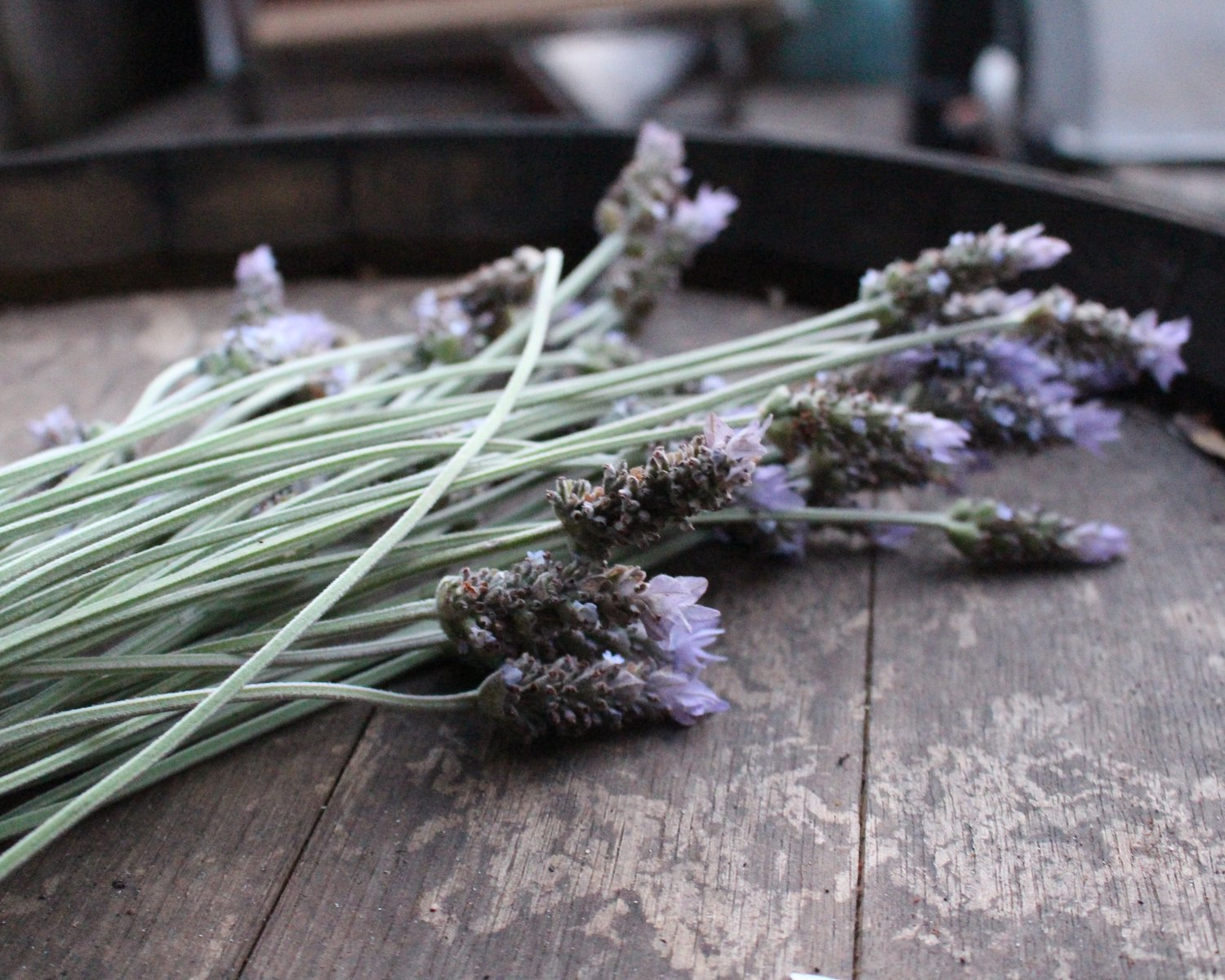 love aunt maggie dried lavender