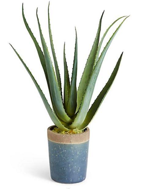 Aloe Vera Plant  Was €95 - 20% = €76   Click Here