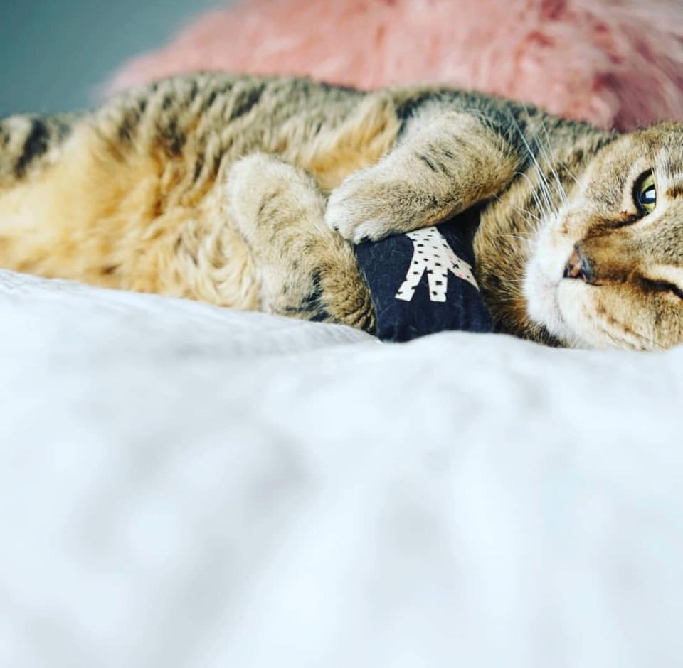 cat treat.jpg