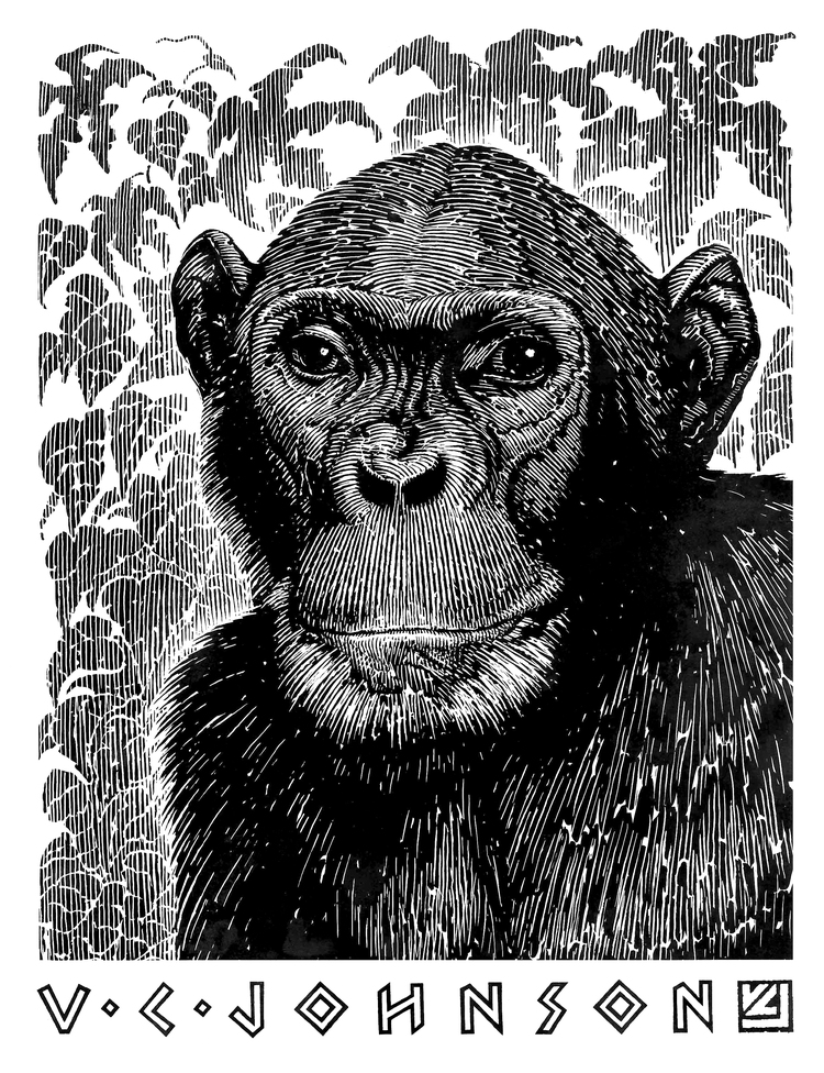 scratch_board_chimp.jpg