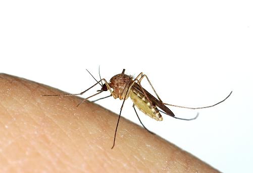 Zika virus information in San Diego.