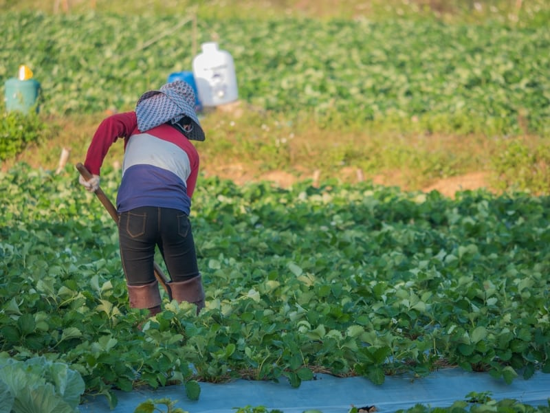 California Workers' Compensation for Agricultural Workers