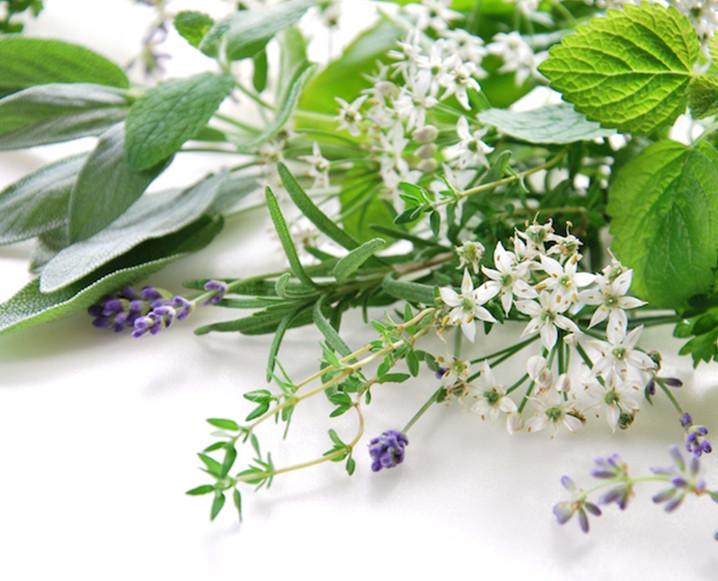 TCM - Power of Herbs