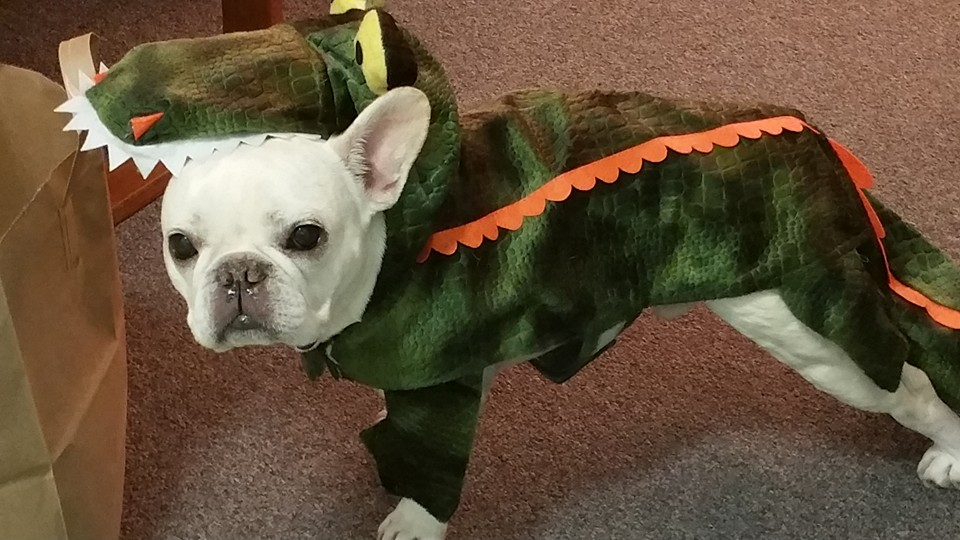 One of our cast doggies, Eddie, dressed up for the occasion!