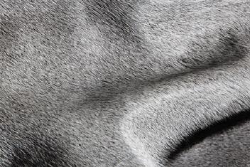 Heath. Grey