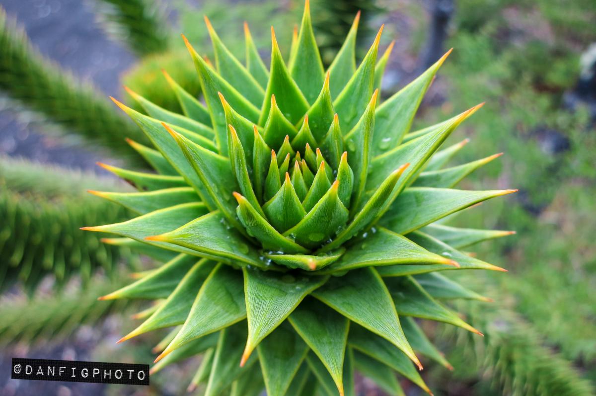14-DanFigPhoto-hpm-031.jpg