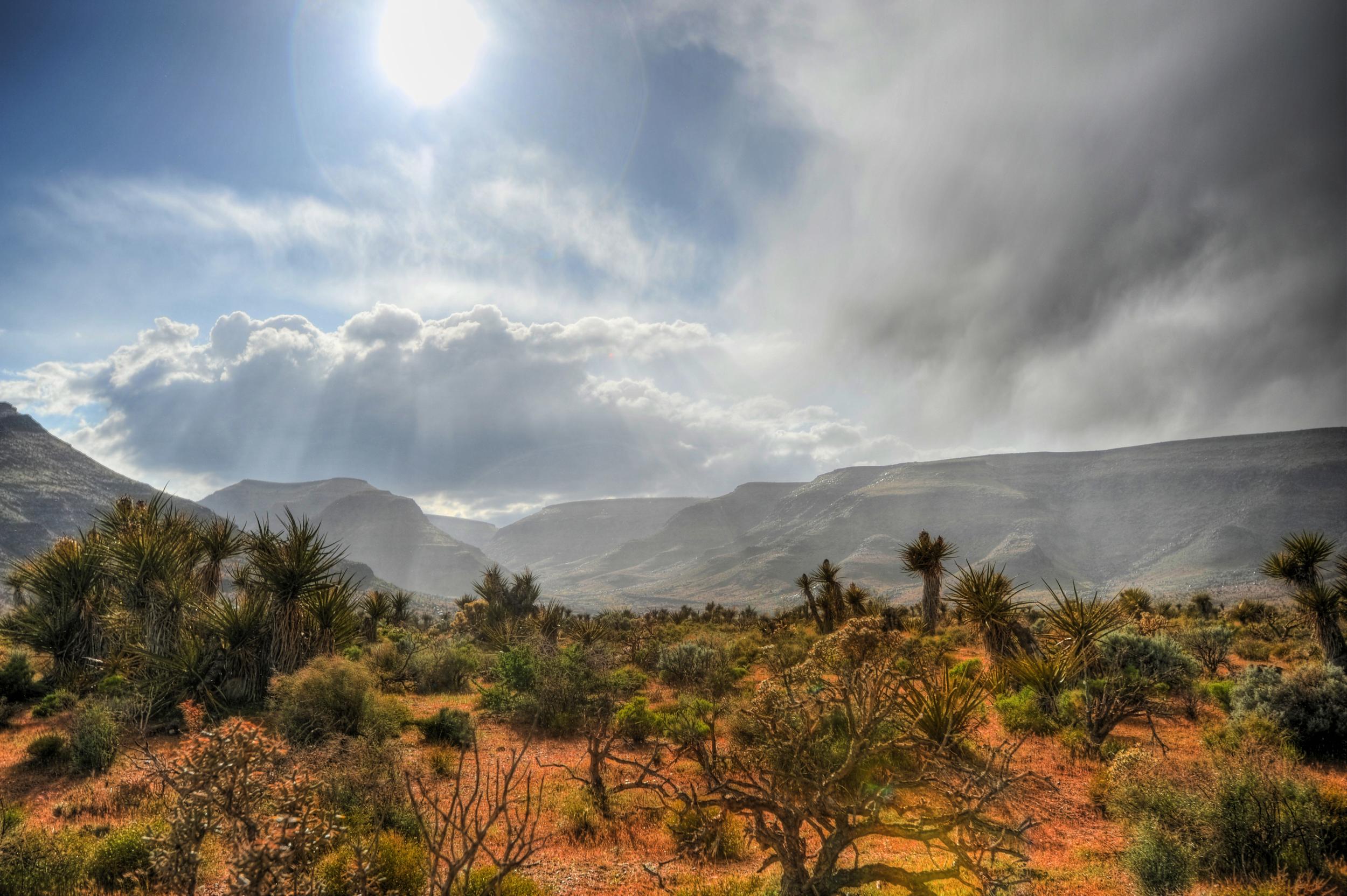 Desert Storm Clearing.jpg