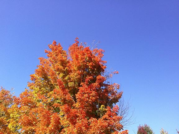 autumnlove.png