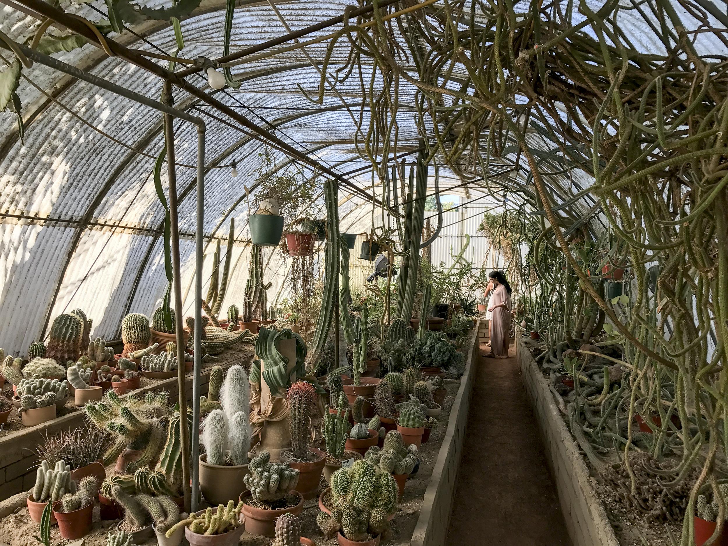 Cactarium at Moorten Botanical Gardens