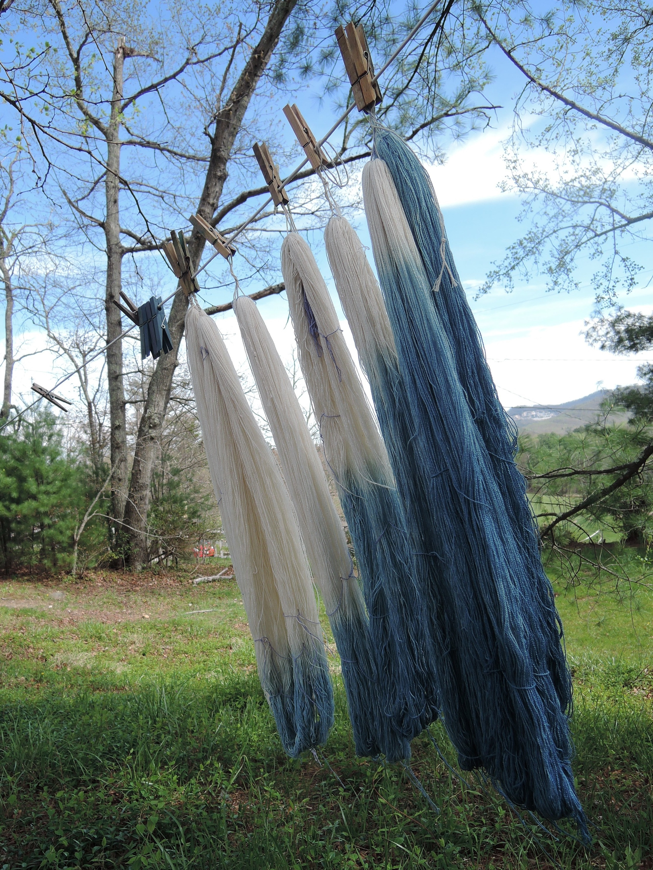 Carefully dyed skeins drying outside.