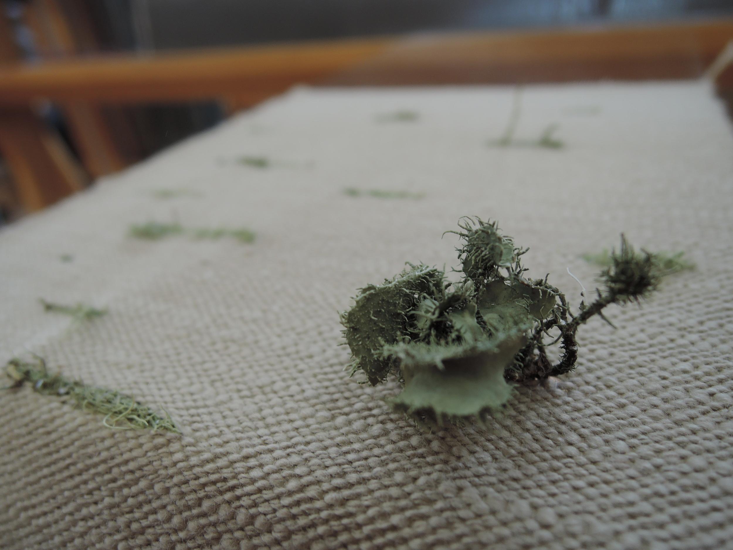 Lichen weaving detail.