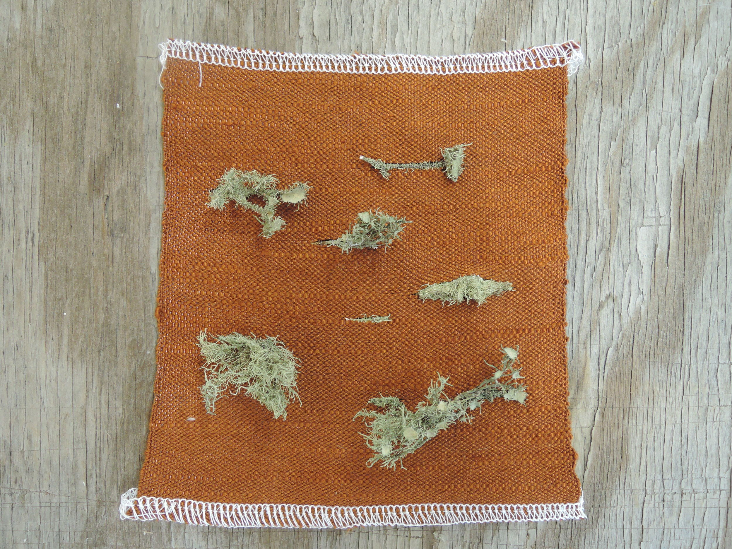 Lichen sample with a 70s style yarn.